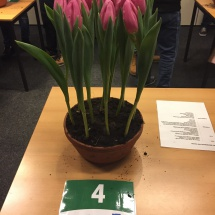 Pot 04 Pink Flag 70-50-50-50