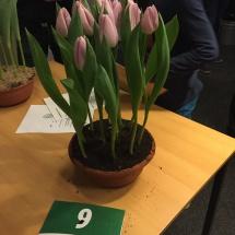 Pot 09 Candy Prince 60-50-50-55