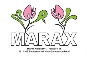 Marax Tulips